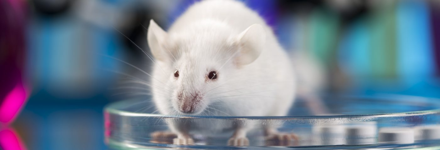 High Biotin Doses Restore Nerve Cell Health in ALD Mice, Study Shows